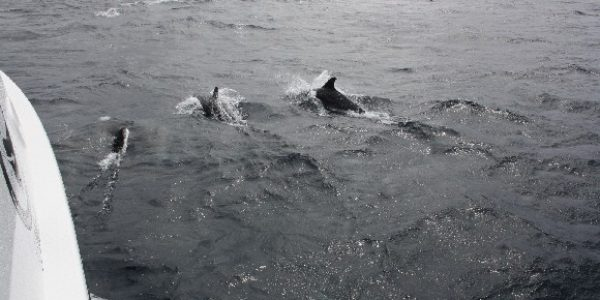 3_dolphins